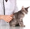 Ветеринарные клиники в Кемле